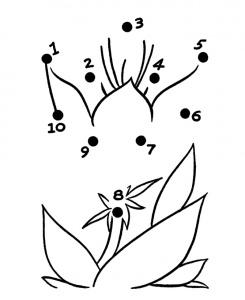 planta de colorat