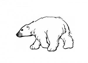 desene de colorat - ursul 2