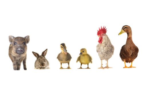 animale-potrivite-pentru-copii