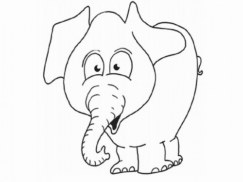 elefant_width