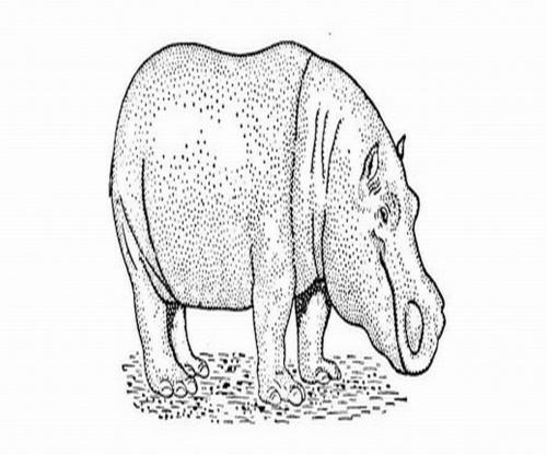 hippo_width