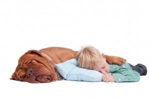 Copiii si animalele - se inteleg?