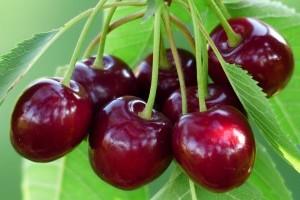 Beneficiile cireselor asupra organismului