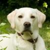 Terapie asistată de animale pentru copii