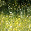 Alergiile, neplăcerile sezonului de primăvară