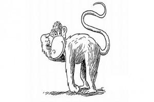 Animalele junglei - desene de colorat pentru copii